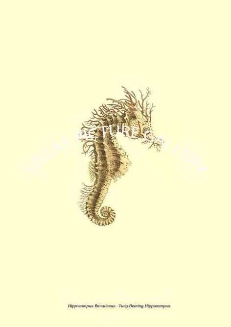 Fine art print of the Hippocampus Ramulosus - Twig-Bearing Hippocampus by the artist Frederick Polydore Nodder